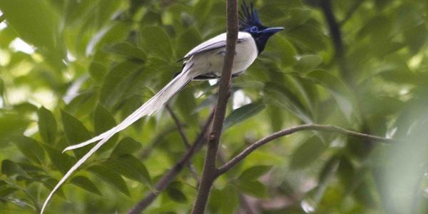 mp_bird2_600X300