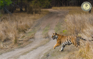 wildlife-and-tiger-safari-in-india
